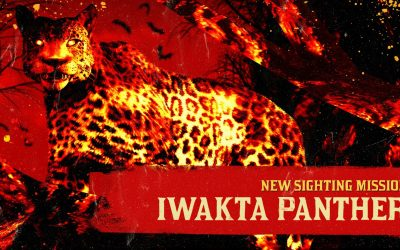 red-dead-online-iwakta-panther